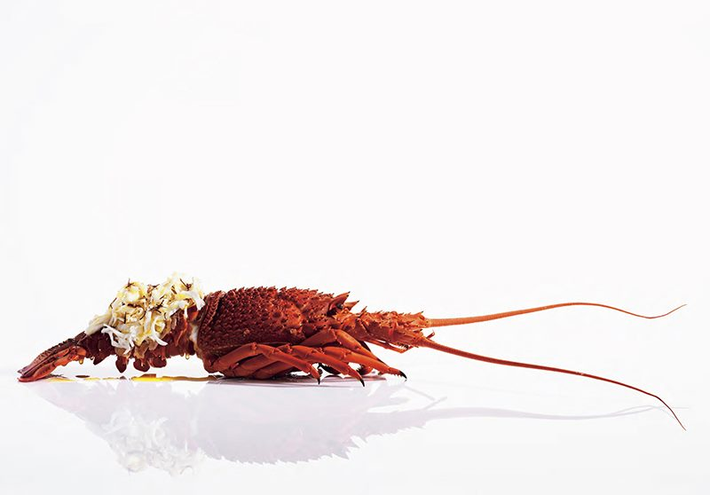 Food Fashion Love Rob Palmer Photography