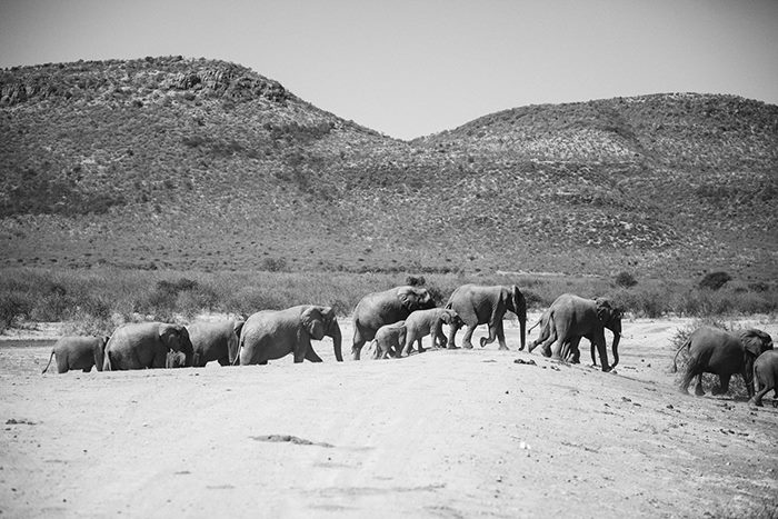Out of Africa Rob Palmer Photography