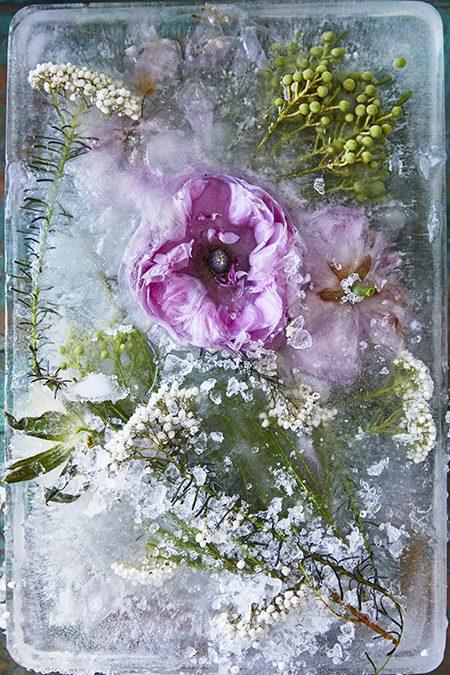 A Garden Fizz Story Rob Palmer Photography